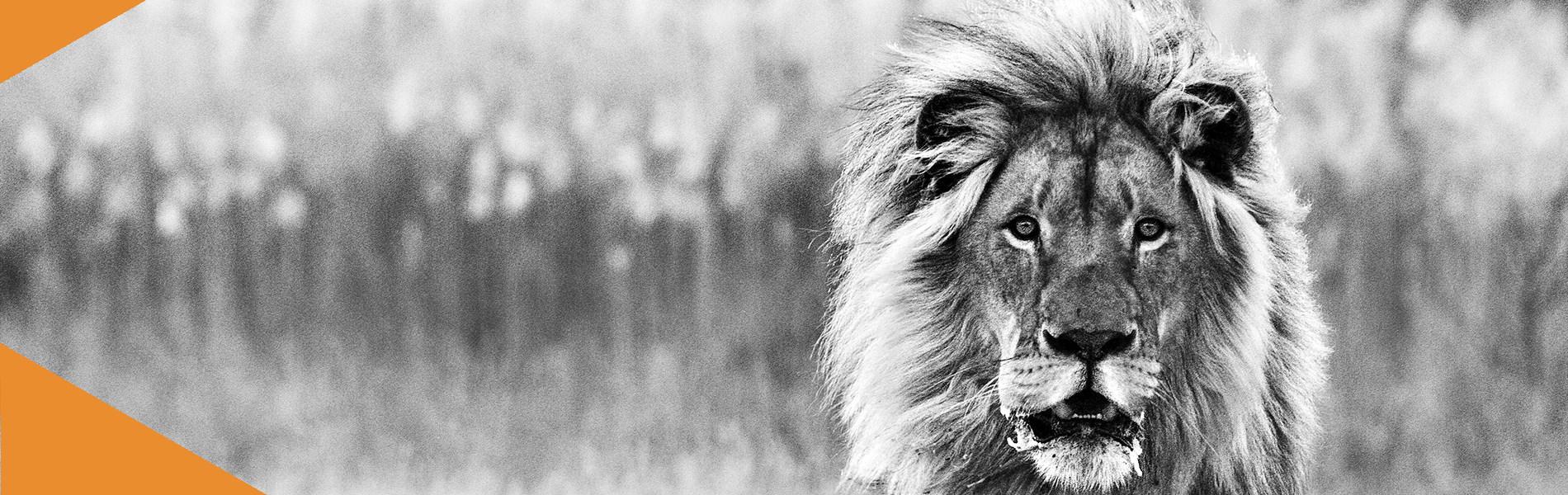 Species – Lion 2013 1900×600